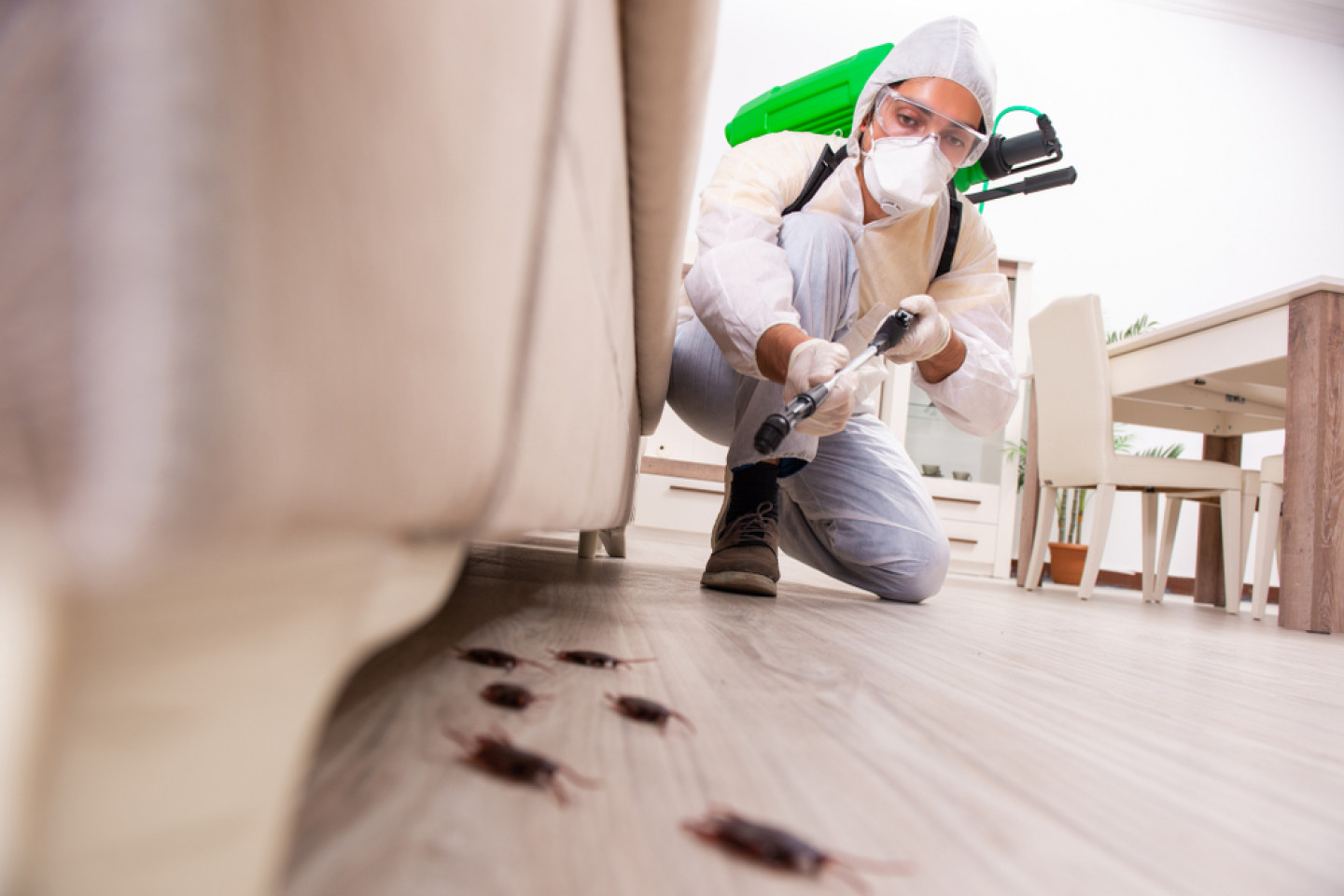 Protect Your Carrollton and surrounding areas in TX Business Facility From Infestation